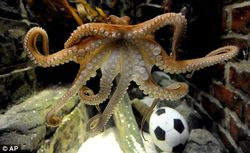 new words, slang, funny words, naming, humor, neologisms, propagandimal, paul the psychic octopus, propaganda, octopus